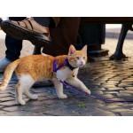 Можно ли выгуливать кошку на улице? - Да!