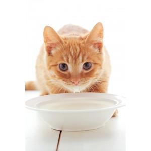 Почему так важно кормить котят по расписанию