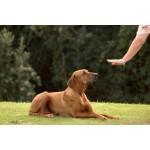 3 полезных команды, которым следует научить вашу собаку