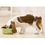 6 советов, которые помогут сделать так, чтоб ваша собака ела медленнее