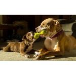 Выбор игрушек для собак и уход за ними.