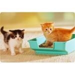 Приучение кошки к туалету в квартире и загородном доме