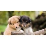 Пять распространенных привычек у собак
