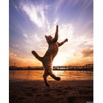 Как обеспечить достаточную активность домашней кошке
