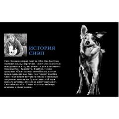 Корм GO! NATURAL Holistic для щенков и собак с цельной курицей, фруктами и овощами - 2,72 кг - DAILY DEFENCE™ Chicken Dog Recipe