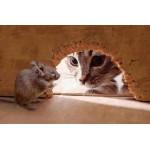 Охотничьи инстинкты у кошки - как быть?
