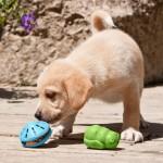 Как интерактивная игрушка поможет вашей собаке стать активнее?