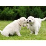 Как помочь вашей собаке стать более ласковой?