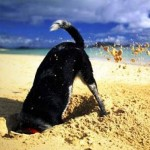 Почему собаки так любят рыть землю, и как с этим бороться