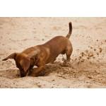 Как отучить собаку есть с земли на улице?
