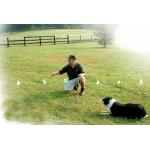 Принцип работы невидимого забора или электронной изгороди для собак