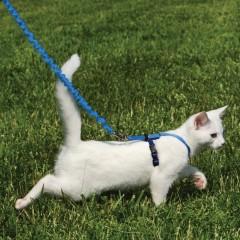 Шлейка прогулочная для кошек Easy Walk™- сред.голуб.